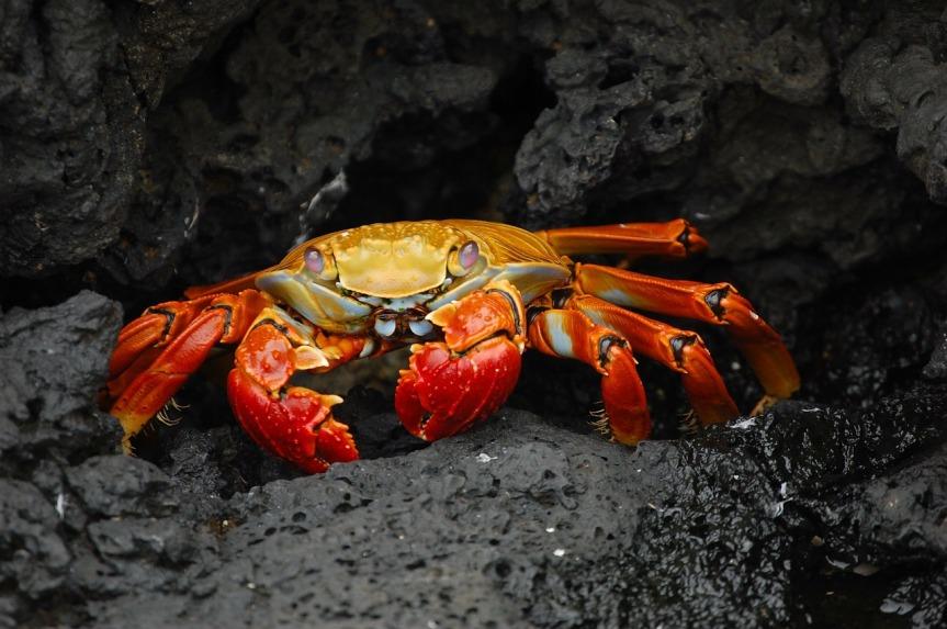 Detektivatbeit um Krabbe Kunibert; der lange Weg zurDiagnose